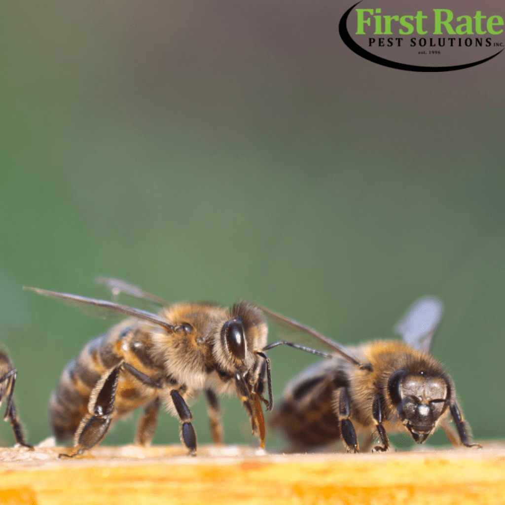 Bee Control Westchester