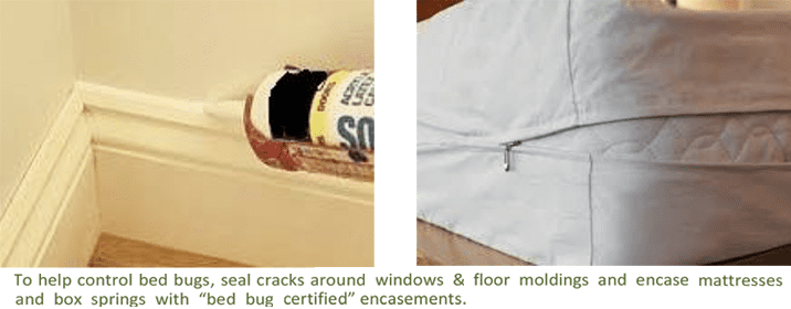 bed_bugs_prevention
